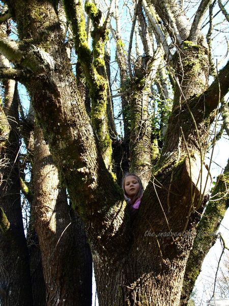 Girl climb tree high