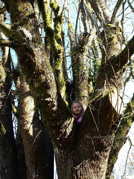 Girl climb tree high