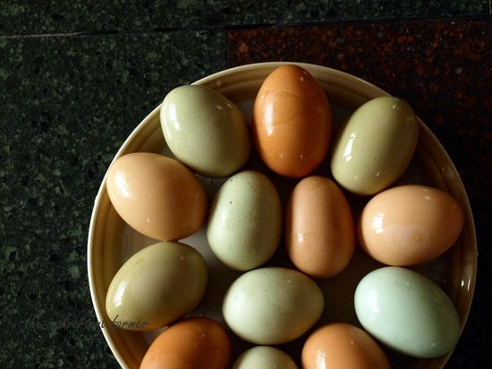 Spring eggs green blue brown