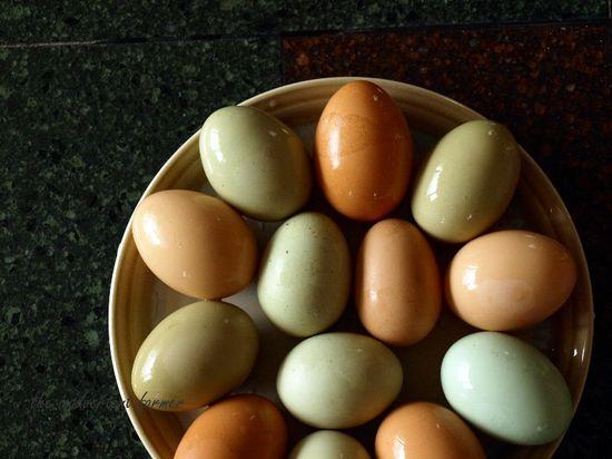 Spring eggs green blue brown