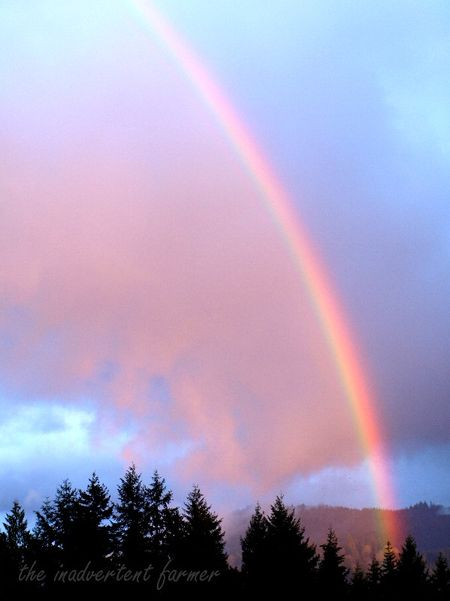 Garden day rainbow pink cloud