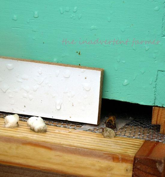Bee hive rain