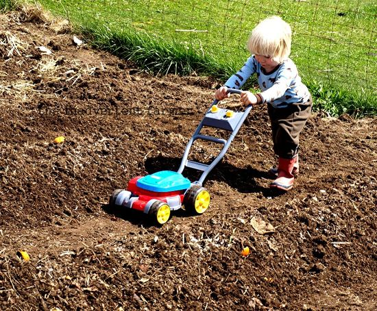 Little boy mow tomato patch