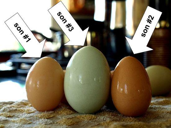 Three egg sons