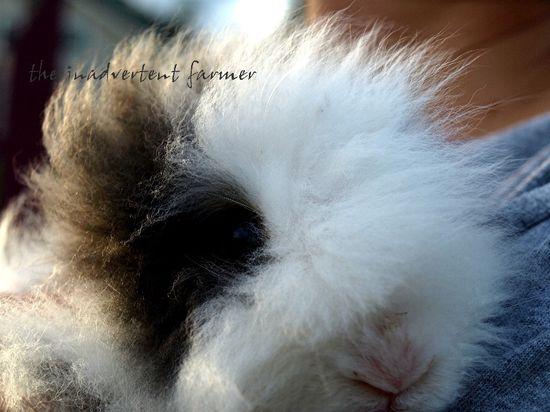 Ollie rabbit cuddle
