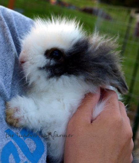 Ollie baby rabbit