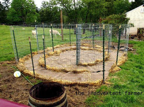 Maze garden straw1