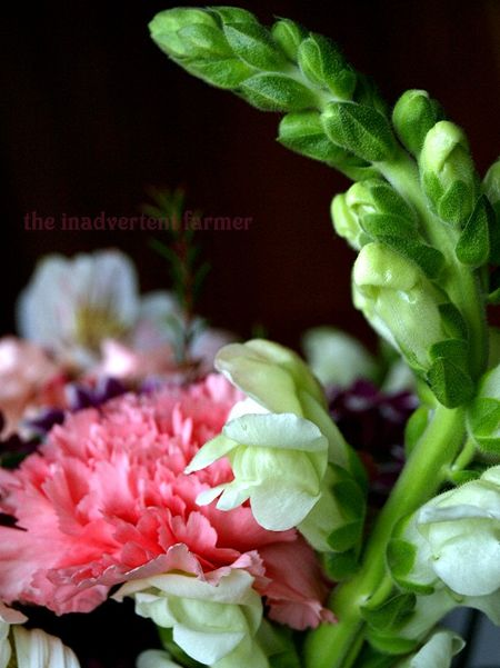 Mothers day flowers snapdragon carnation