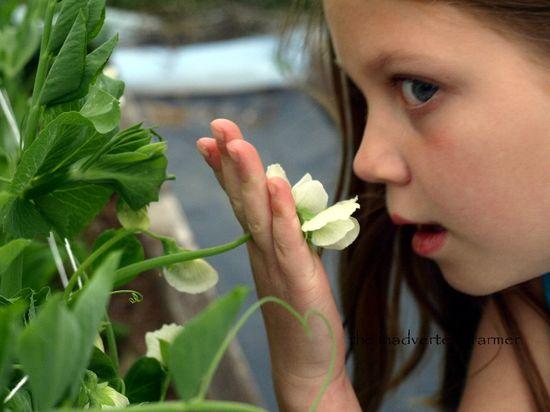 Pea blossom little girl smell