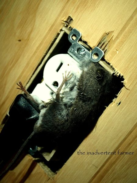 Mouse electricuted feet