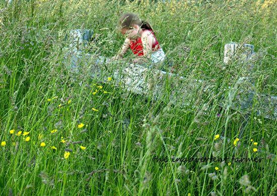 Grassy field fence girl climb