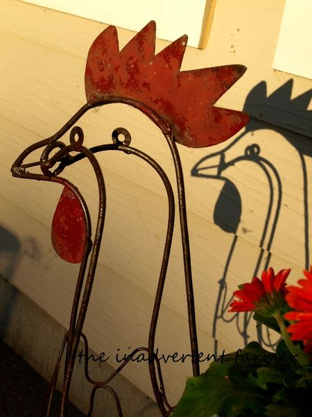 Rooster shadows