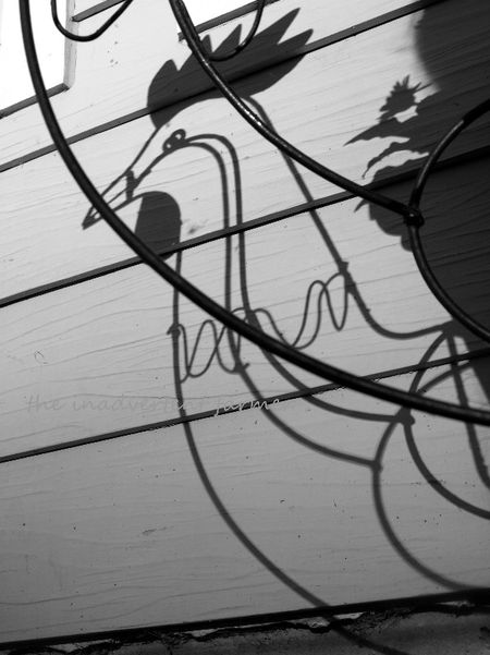 Rooster shadow black white