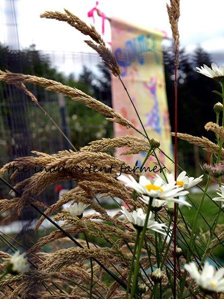Summer banner flag grass daisy