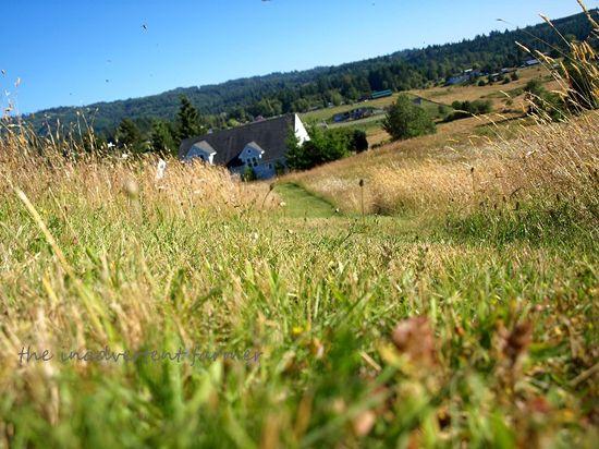 Field of daisies path to grandma's
