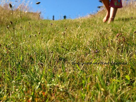 Field of daisies girl feet