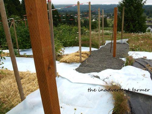 Raspberry patch gravel