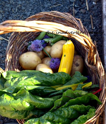 Garden harvest basket vegetables