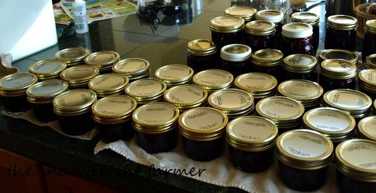 Plum berry jam in jars
