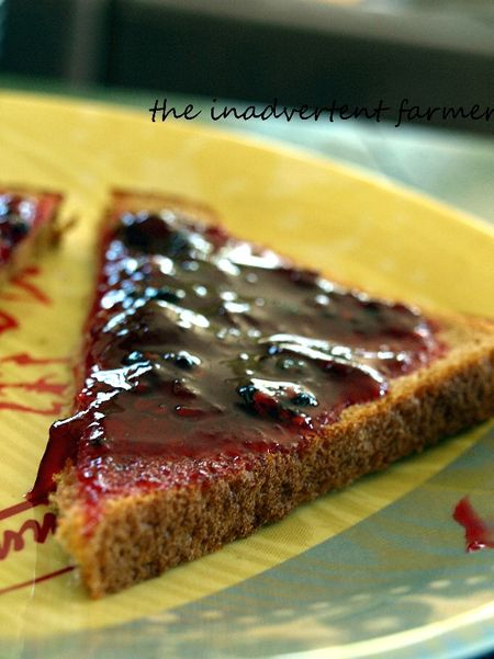 Plum berry jam on toast