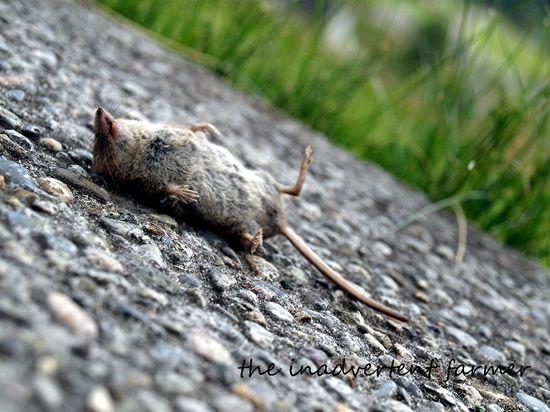 Mouse dead