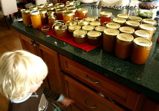 Canning jars filled plums