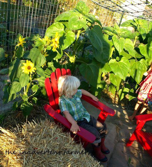 Maze garden sunflowers red chair children