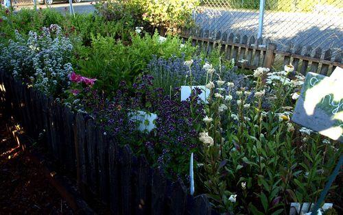 Master gardener flowers