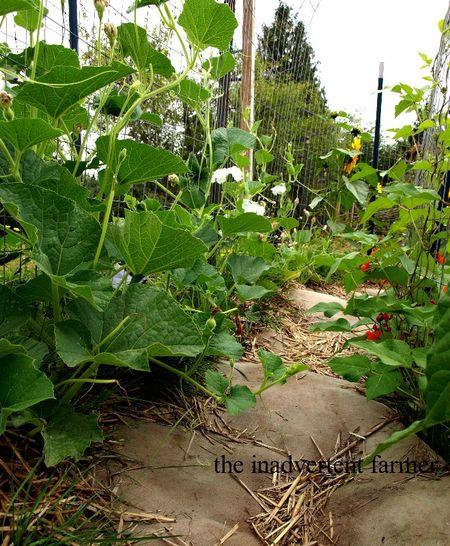 Maze path gourds beans