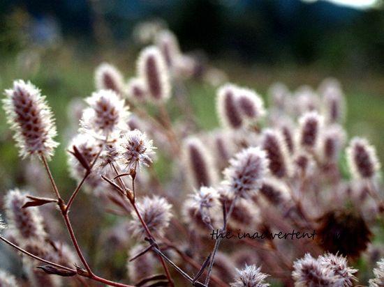 Fuzzy weeds bokeh dusk