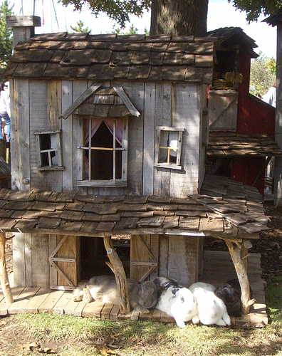 Rabbit hutch farm house