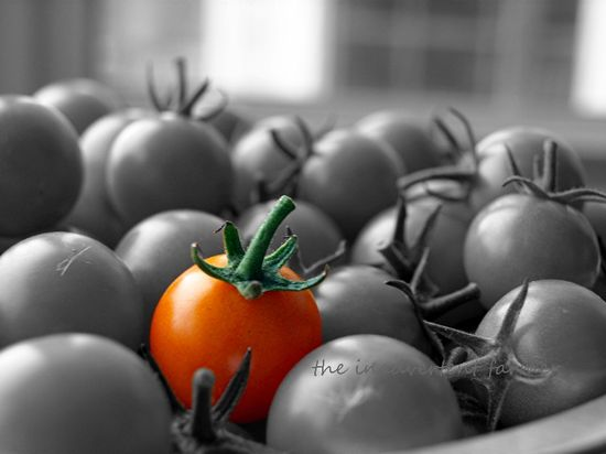Tomatoes color spot orange