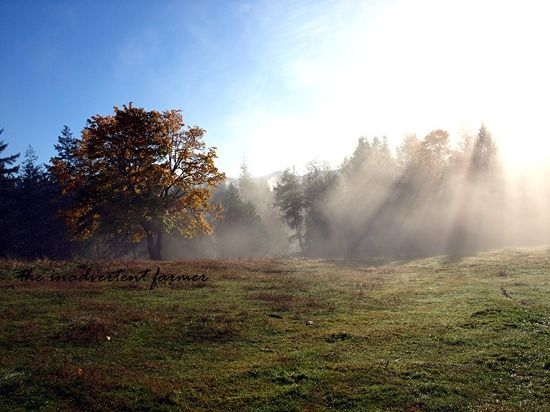 Sunbeams morning mist