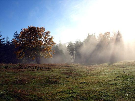 Sunbeams morning mist