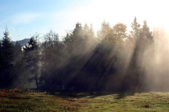 Sunbeams trees morning autumn
