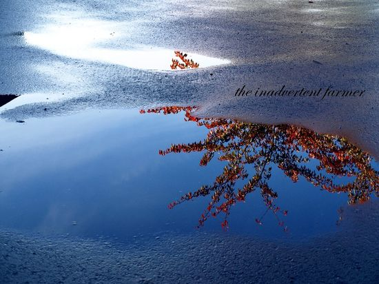 Rain puddle tree reflection autumn