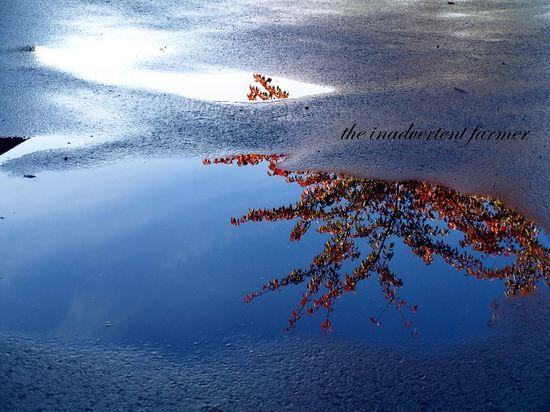 Rain puddle tree reflection autumn