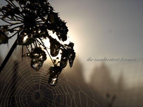 Spider web lace sunrise