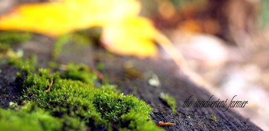Moss on log macro