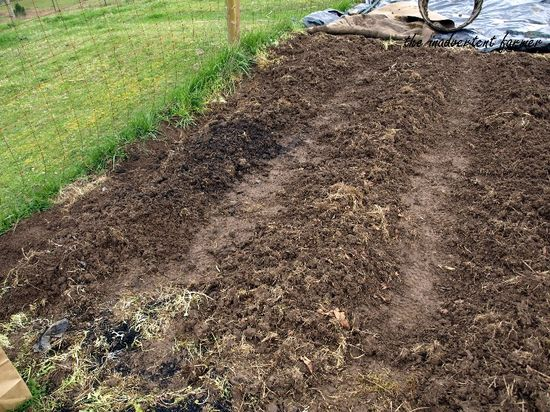 Planting potatoes2