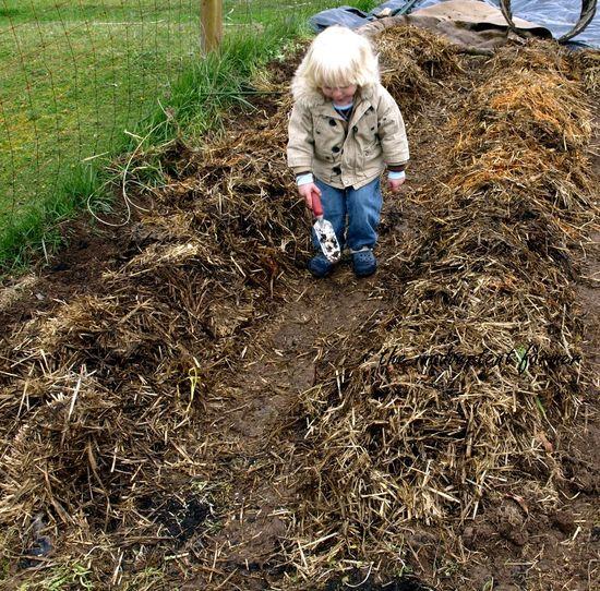 Planting potatoes4