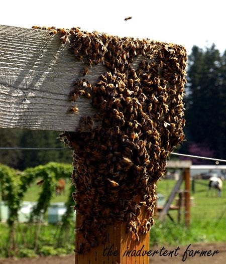Bee hive swarm new