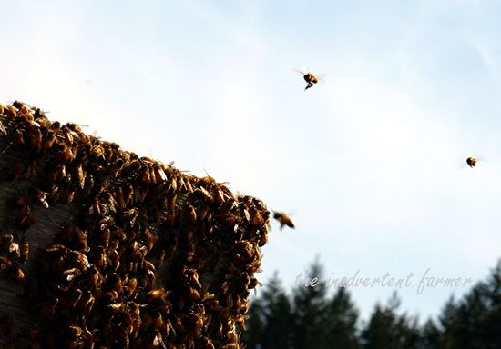 Bee hive swarm flying
