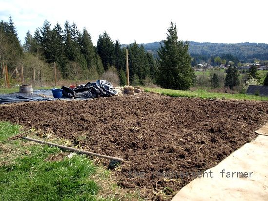 Tilled ground tomato patch