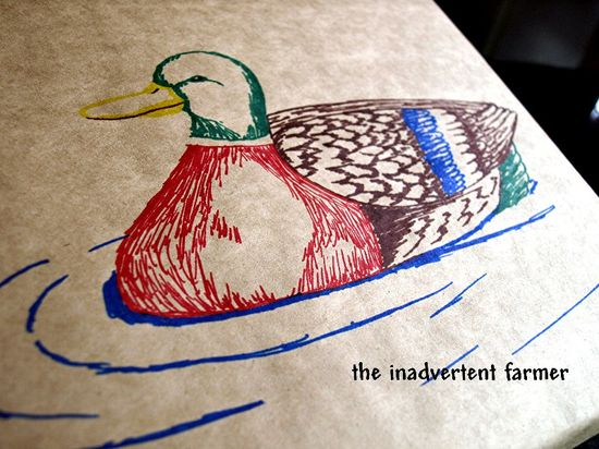 Birthday mallard duck sketch