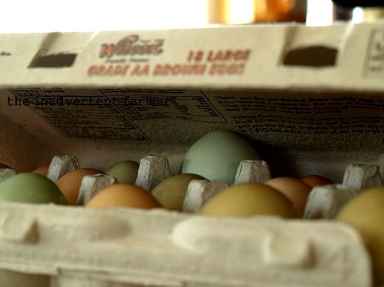 Three eggs carton closed