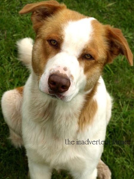 Zeek dog
