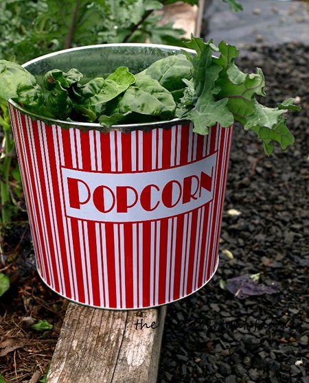 Popcorn bucket greens garden