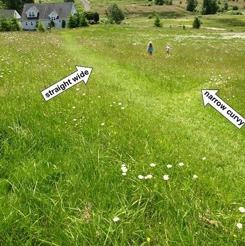 Grass field paths straight curvy