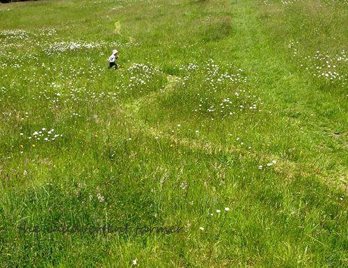 Grass field boy run